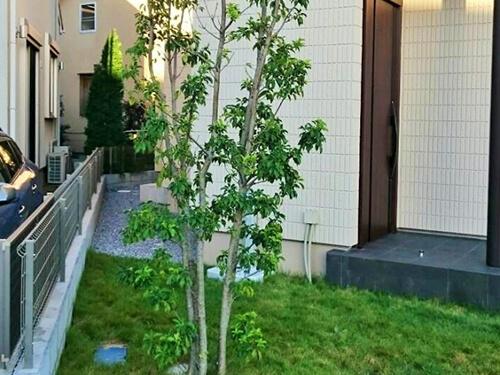 ガーデン・庭・植木