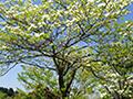 植栽・シンボルツリー