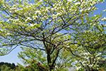 シンボルツリー・植栽